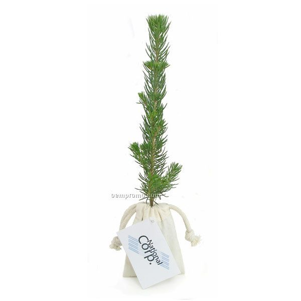 Blue Spruce Evergreen Tree Plug In Natural Cotton Bag W4 Color Hang ...